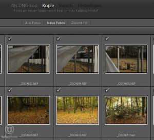 Fotoarchivierung - Fotos Kopieren