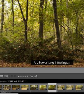 Fotoarchivierung - Bewertung mit Sternchen